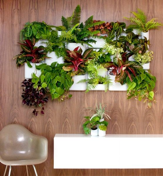 4 Ways to Display Plants in a Small Space